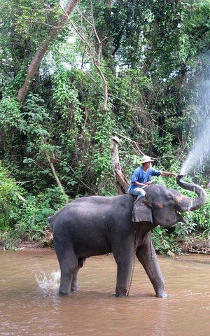 elephant-2426786_640