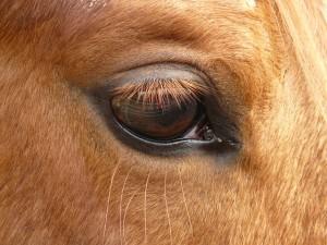 horse-49637_640